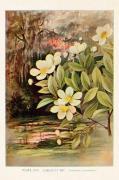 Plakat Gardenia 18x24 cm
