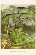 Plakat Palm 50x70 cm