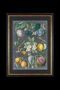Billede VS: Orchard Varieties 3